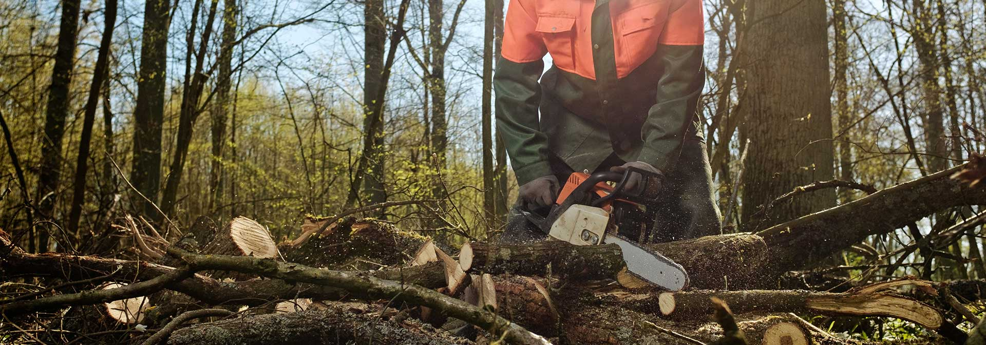 Forstunternehmen-strack-erftstadt
