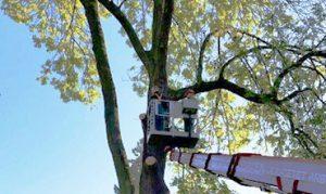 Baumpflege-Strack